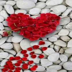 Şiir Şiirler - En güzel şiirler - Babamın Şiir Defteri